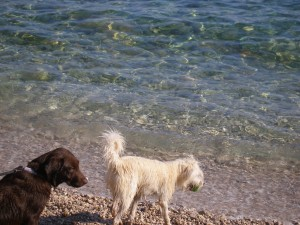 Plaža za pse